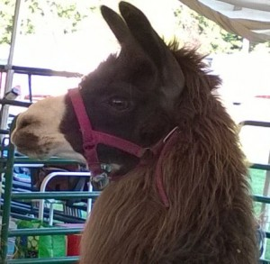 mean_llama